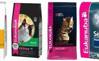 «Эукануба» (Eukanuba) корм для кошек: обзор, состав, ассортимент, плюсы и минусы