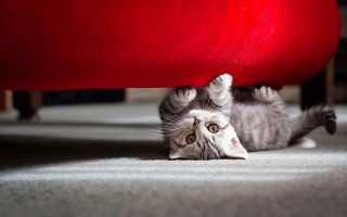 Феливей: феромон для кошек, когда применяется средство, противопоказания и побочные действия