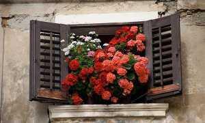 Уход за геранью в домашних условиях зимой: полив, подкормка и другие аспекты