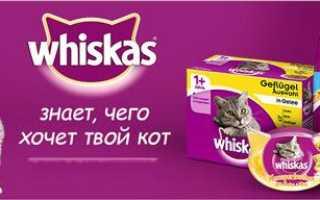 «Вискас» корм для взрослых кошек и котят: обзор, состав, ассортимент, плюсы и минусы