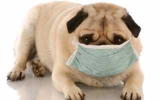 Домашние животные для аллергиков