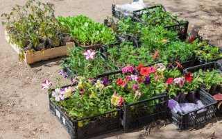 Неприхотливые однолетние цветы для дачи: названия и фото цветущие всё лето