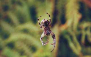 Что означает, если паук спустился с потолка перед лицом: разбор примет