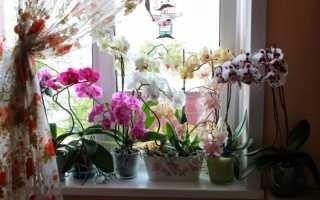 Как пересадить орхидею в домашних условиях правильно + видео и фото