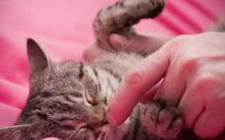 Какой нос должен быть у здоровой кошки – мокрый, холодный, теплый или сухой