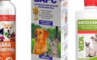 Спрей от блох для кошек: инструкция по применению средства, эффективность