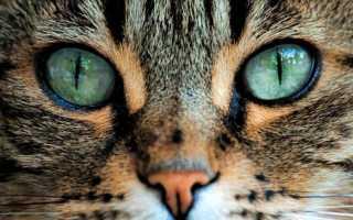 Как видят кошки и коты наш мир: какое у них зрение, различают ли животные цвета