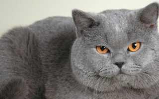 Акне (черные точки) у кошки и кота на подбородке: причины появления под шерстью крупинок