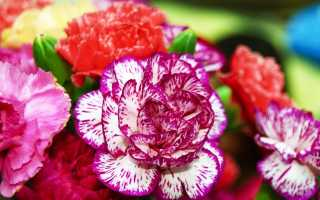 Многолетники для дачи, цветущие всё лето: подборка интересных многолетних цветов
