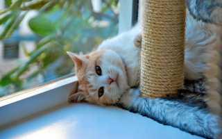 Когтеточка для кошек и котов своими руками: как сделать в домашних условиях