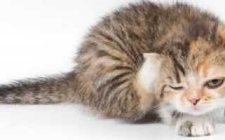 Почему кошка или кот сильно линяет и что делать