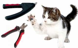 Когтерезки для кошек: какие бывают, на что обратить внимание при выборе