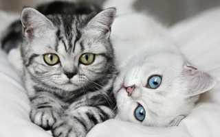 Как отличить кота от кошки и определить пол котенка: как различают