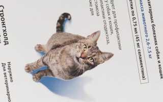 Стронгхолд для кошек: инструкция по применению капель, лечение котят, отзывы о препарате