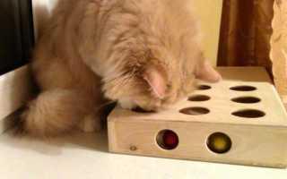 Игрушки для кошек и котов своими руками: как сделать в домашних условиях