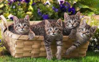 К чему снятся котята по соннику: маленькие, с кошкой, много, рыжие, белые, чёрные и прочее