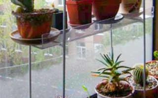 Как ухаживать за кактусами зимой: как поливать, подкармливать, можно ли пересаживать