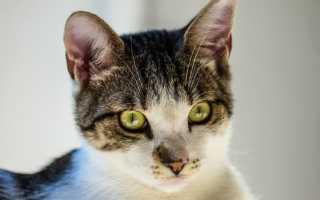 Почему коты смотрят в пустоту: факты и суеверия
