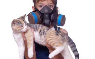 Как избавиться от запаха кошачьей мочи в квартире, какими способами и средствами убрать его