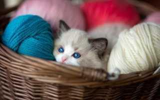 Расцветки кошек, приносящие счастье и удачу
