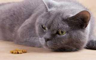 Кот или кошка ничего не ест и не пьет воду несколько дней: причины отказа от еды и питья