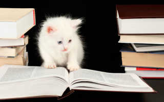 Самые умные породы домашних кошек: особенности и критерии оценки