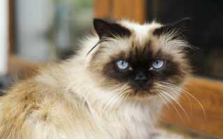 Почему у кота или кошки текут слюни изо рта: причины слюнотечения, что делать и нужно ли лечить