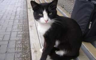Пропал кот или кошка: что делать, где искать животное, как найти потерявшегося котенка