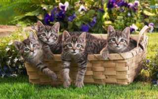 Приют для кошек: что это, куда отдать животное, если оно стало не нужно
