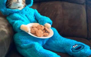 Костюм для кота на Новый год: как сделать своими руками, подборка идей с фото