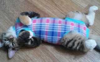 Попона для кошки: после стерилизации, от дождя и другие, как выбрать, сделать своими руками