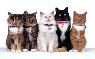 Прививка от бешенства кошке: какая вакцина применяется, как действует, когда делать