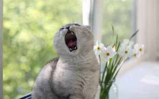 Почему кот или кошка постоянно мяукает, причины такого поведения у взрослых животных и котят