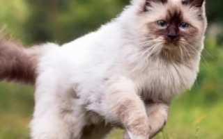 Чипирование кошек: что это, как делают процедуру, в каком возрасте ее проводят