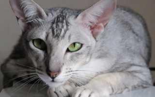 Лишай у кошек и котов: как выглядит, признаки, лечение котят