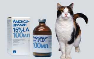 Амоксициллин для кошек: инструкция по применению антибиотика, лекарственная форма