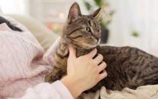 Почему кошки топчут нас лапками: причины привычки, что означае