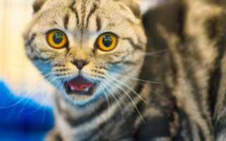 Эпилепсия у кошек: симптомы заболевания, как прекратить судороги, можно ли предотвратить приступы