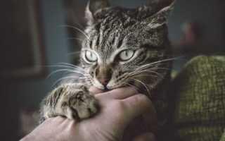 Почему коты кусаются, когда их гладишь, и просто так