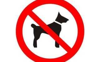 Можно ли заходить в магазин с собакой или нельзя