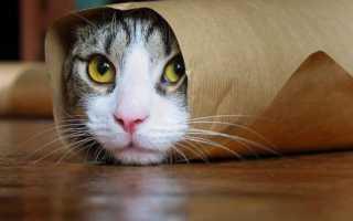 Какие вещи провоцируют кошку на плохие поступки