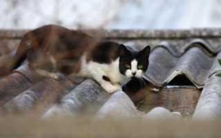 Какой запах отпугивает кошек: как их отпугнуть ароматами, которые животные не любят