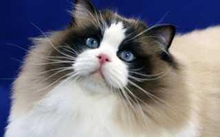 Корм для кошек Now «Нау»: обзор, состав, ассортимент, плюсы и минусы, отзывы ветеринаров и владельцев