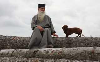 Почему собакам нельзя заходить в церковь