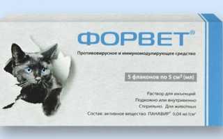 Форвет для кошек: инструкция по применению, показания и противопоказания, побочные действия