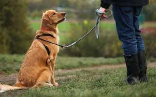 Как собаки чувствуют возвращение хозяина до того, как он войдёт в дом