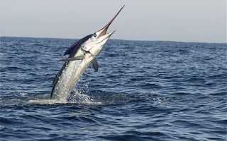 Какую рыбу нельзя есть и почему: список с комментариями экспертов