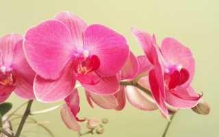 Комнатные орхидеи: виды, фото и названия