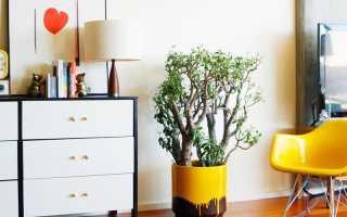 Какие домашние растения не нуждаются в тщательном уходе