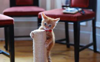 Как приучить кота или кошку к когтеточке, в виде домика